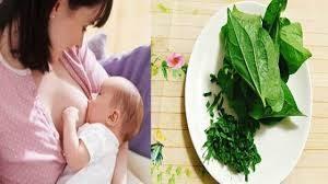 phụ nữ sau sinh nên kiêng ăn lá lốt